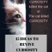 Curiosity killed the cat | Solowords into Action | Curiosity