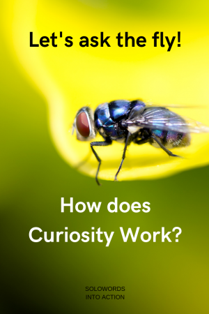 How does curiosity work | Solowords into action